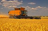 Colorado Wheat Harvest-2012, HDR.
