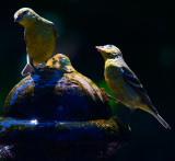 Looking up to the light  _MG_5578.jpg