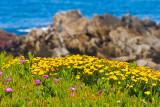 Flowers by the ocean _MG_9398.jpg