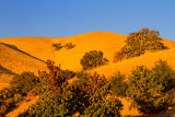California golden hills sunset  _MG_9233.jpg