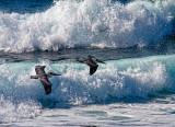 Skimming ocean waves  _MG_2788.jpg