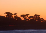 Sunset trees  _MG_1721.jpg