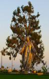 Our Lady of Peace Shrine Roman Catholic Church Santa Clara CA at sunrise .jpg