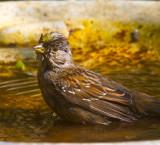clean bird  _MG_7457.jpg