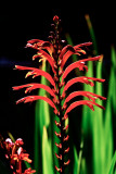 red on green _MG_8465.jpg