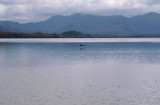 Bathurst Harbour, with swan