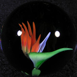 Bird of Paradise  Size: 1.62  Price: SOLD