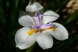 Flower at M