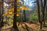 From an autumn Sunday walk