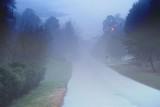 My morning walk