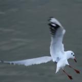 Virage sur l'aile