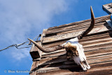 Texas Longhorn on Weathered Wood