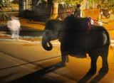 9912 Nightime Wedding Elephant.jpg