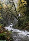 Cinnabar Creek/Falls