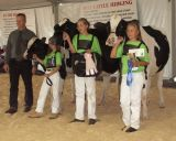 Show Cows '06
