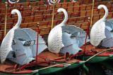 Swanboats II, Public Garden