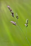 WILD GRASS_4169.jpg