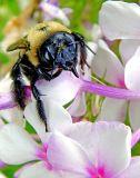 BUMBLE BEE  2220x.jpg
