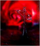 Another rose splash.