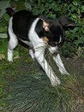 2006-09-01 Dog bites grass