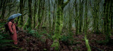 The Elfin Forest  (BakerRiver_120212-59-2.jpg)