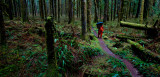 Forest Along The Baker River Trail  (BakerRiver_120212-89-3.jpg)