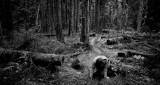 Along The Baker River Trail  (BakerRiver_120212-101-4.jpg)
