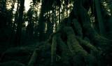 Moss & Green (RockportSP_022213-4-1.jpg)*