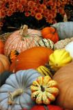 Fall 2012 - Pumpkins, fall photos, AMA at Nick's, Thanksgiving at Martha's, kittens, St. Bernard