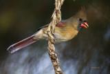 birds_2012
