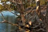 Coffs Creek NSW IMG_4778.jpg