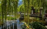 Chinese Garden of Friendship Sydney IMG_5618.jpg