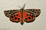 Moths 2012