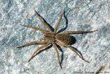 Spider sp.