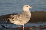 Seagull UTC December 18 2012