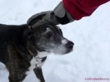 # 25 - Snow Dog
