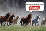 Equine troubles