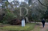 O Parque D. Carlos em 21 de janeiro de 2013