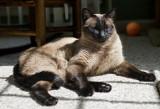 Tessa Cat