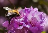 Bumble Bee's Playground