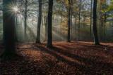 Petite promenade matinale en sous-bois