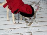 Petie's Coat