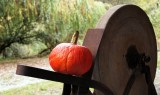 I've got a pumpkin to grind