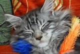 Mr Sleepsalot