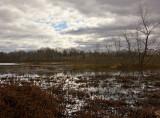 Walker Avenue Wetlands