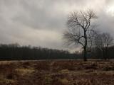 Great Piece Meadows
