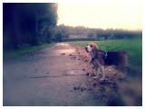 Walking the Beagle