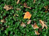 The plastic leaf
