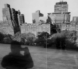 Shadow in Central Park