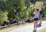 The tourists observe the docile-looking animals